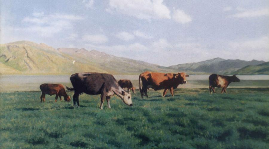 Herds of cows